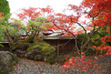 箱根紅葉-006