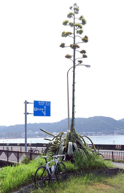 湘南・夏-001