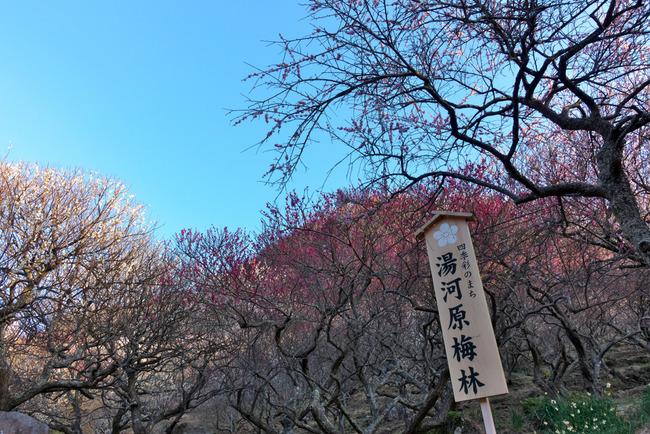 伊豆大島-001
