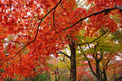 箱根紅葉-003