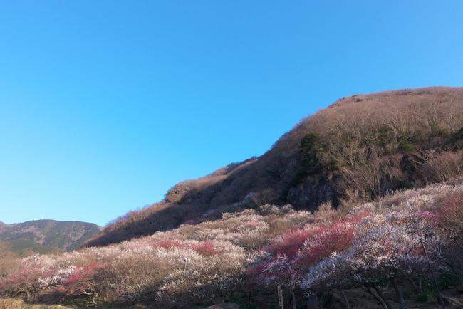 伊豆大島-002