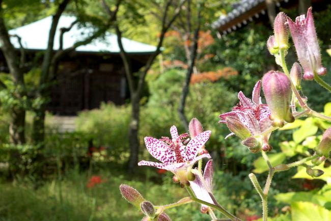 秋涼の鎌倉-004