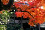 鎌倉紅葉-001