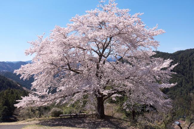 奥武蔵桜めぐり-007