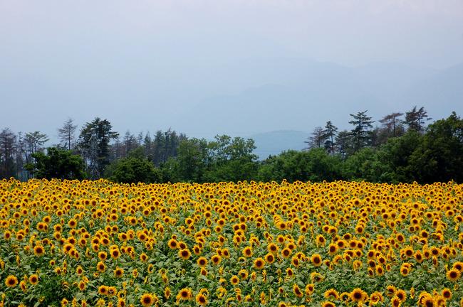 八ヶ岳高原-001