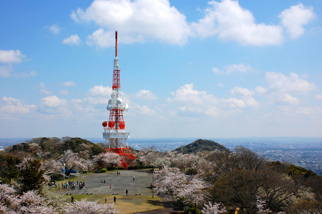 桜散る-002