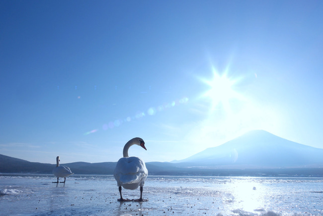 山中湖冬景色-009