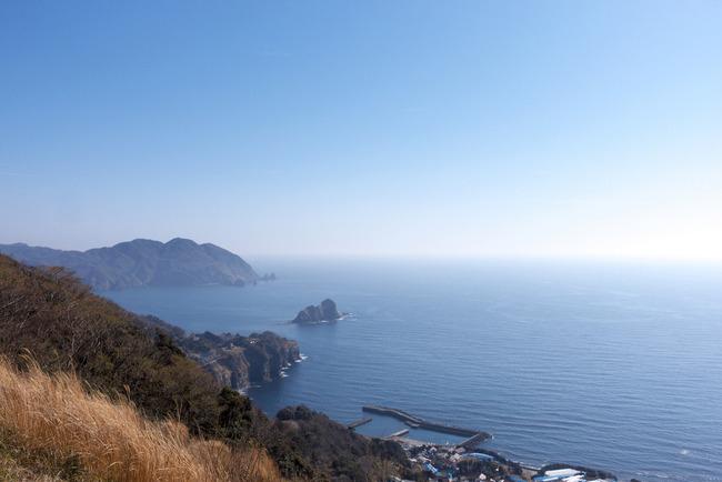 南伊豆河津桜-028