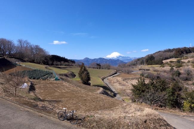 松田町河津桜-002