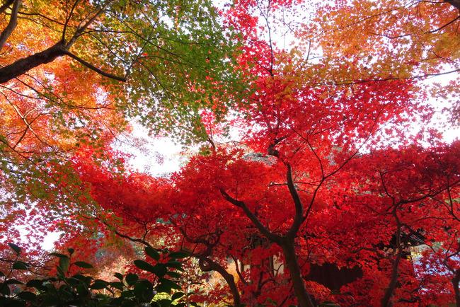 鎌倉紅葉-003