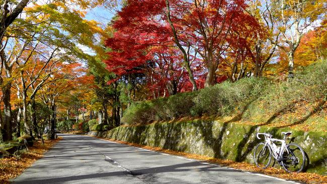 東湖畔道路