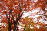 山中湖紅葉まつり-009