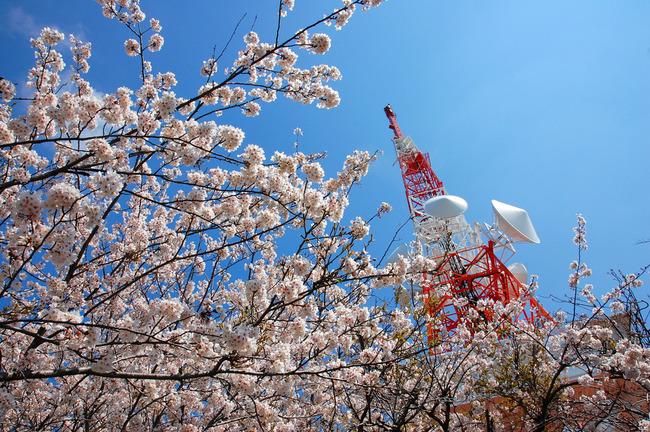 桜散る-001