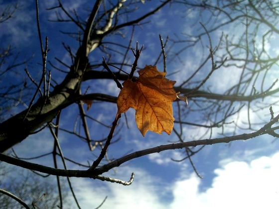 the_last_leaf_of_autumn_by_skimits-d36qxlo