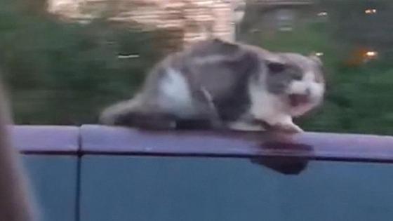 cat-on-roof-hln-van-super-169
