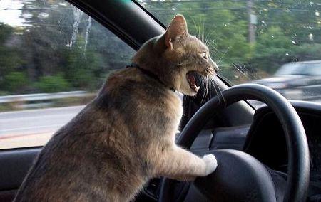 クラクション猫