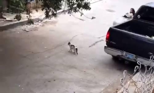 【悲報】女さん、車で猫を轢いてそのまま走り去ってしまう・・・