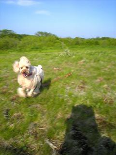 風に向って走る。走る。