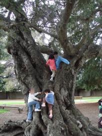 ととろの木で