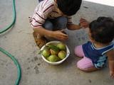 apple@garden2