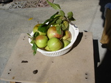 apple@garden