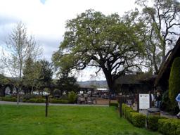 V.Sattuiのお庭