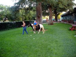 ponny riding