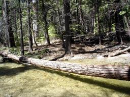 川にかかる丸太