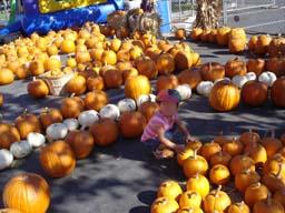 かぼちゃに埋もれる末っ子