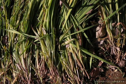 IMG_3533a