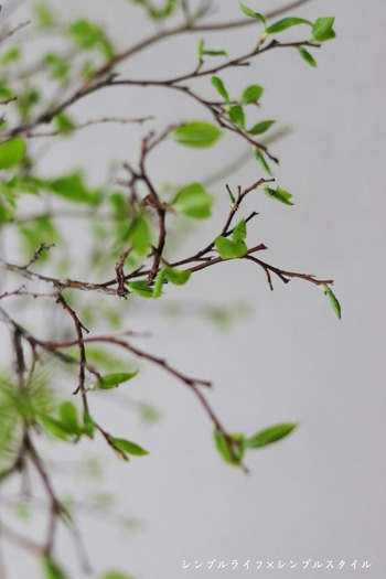 IMG_9260a