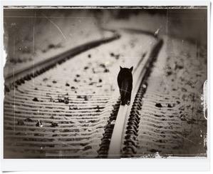 Gato-preto-no-trilho