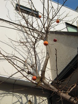 ダイアのシンボルツリー