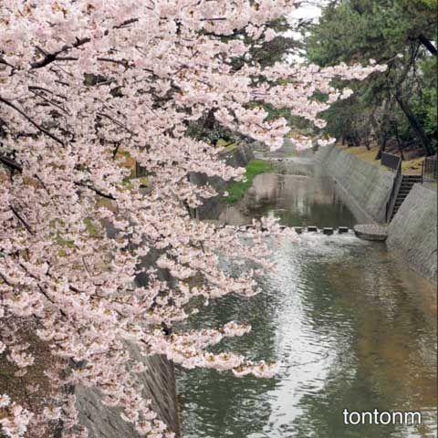170408b-夙川2