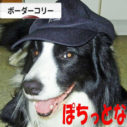 ブログ村 犬ブログ ボーダーコリーへ