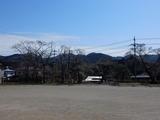 旧上岡小学校の桜�