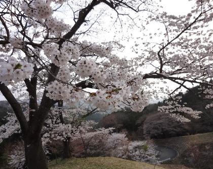 沓掛峠4月24日(1)