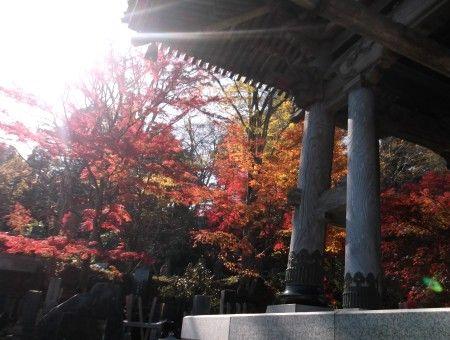 11月16日永源寺5