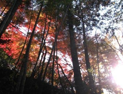 11月16日月待の滝3