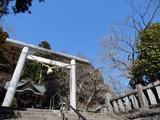 十二所神社の桜�