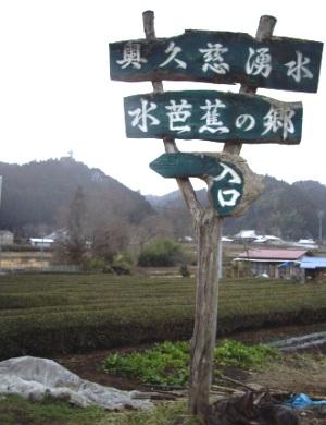 2010水芭蕉4
