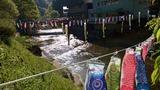 滝川 鯉のぼり