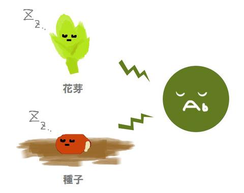 アブシジン酸と花芽と種