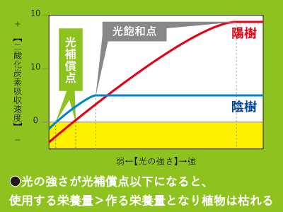 陰樹陽樹グラフ
