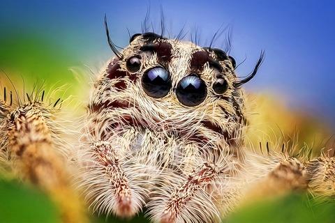 spider-2059718_960_720[1]