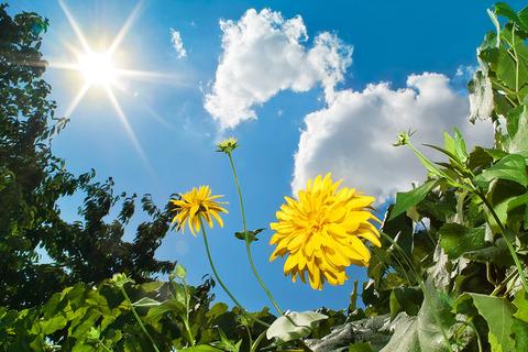 太陽と植物2