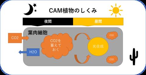 CAM植物の仕組み