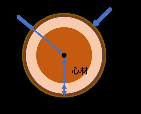 樹木断面イメージ図