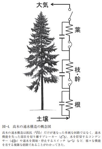 高木の通水構造の概念図