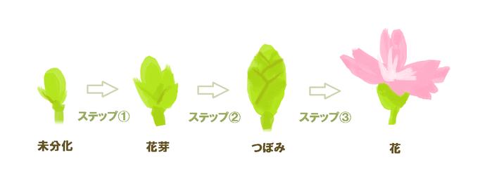 3つのステップ